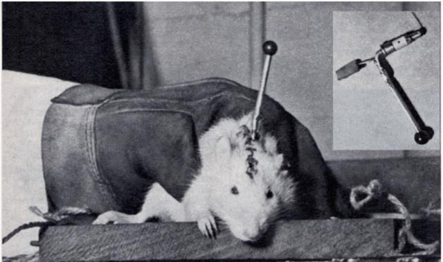 Ratón Cyborg imagen