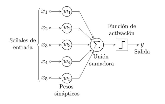 imagen del perceptrón