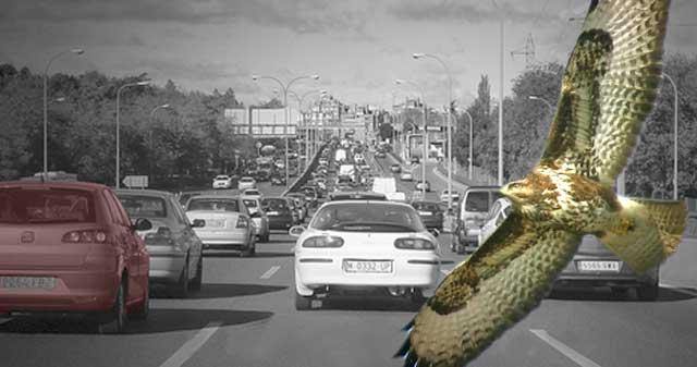 Semáforos basados en el flujo de las aves migratorias para evitar atascos