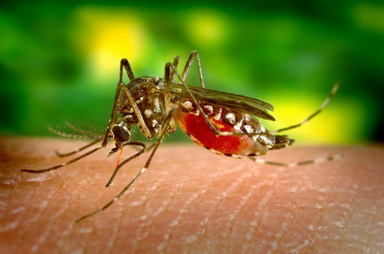 Imagen de un mosquito
