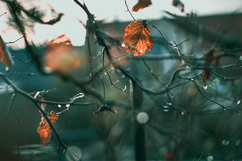 Imagen otoño, hojas
