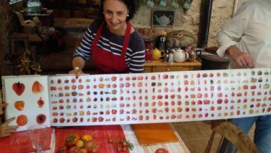 Cata de tomates