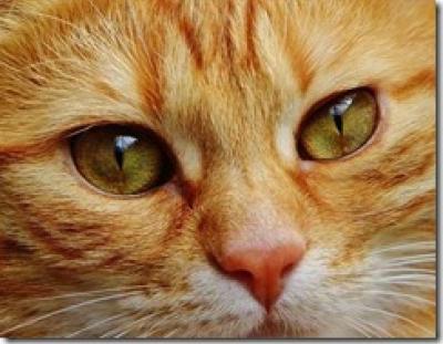 Figura 2: El cerebro artificial de Google aprende a identificar la imagen de un gato.(fuente)