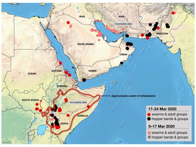 Mapa de distribución plaga (Observatorio de langostas de la FAO)